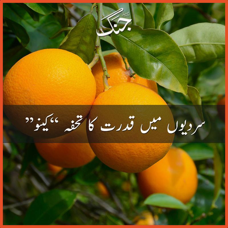 orange kino - nature's gift in winter