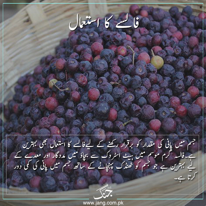 Phalsa fruit keeps you hydrated