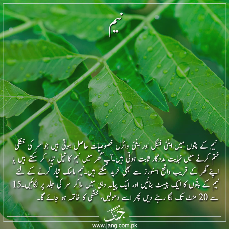 get rid of dandruff with neem