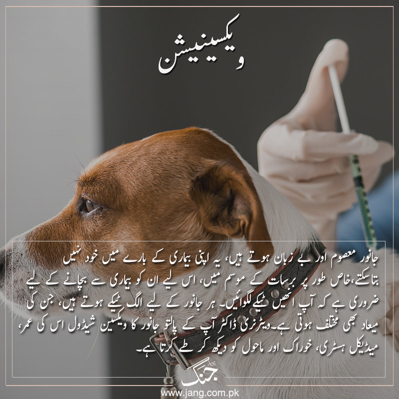 vaccination taking care of pets from ailments