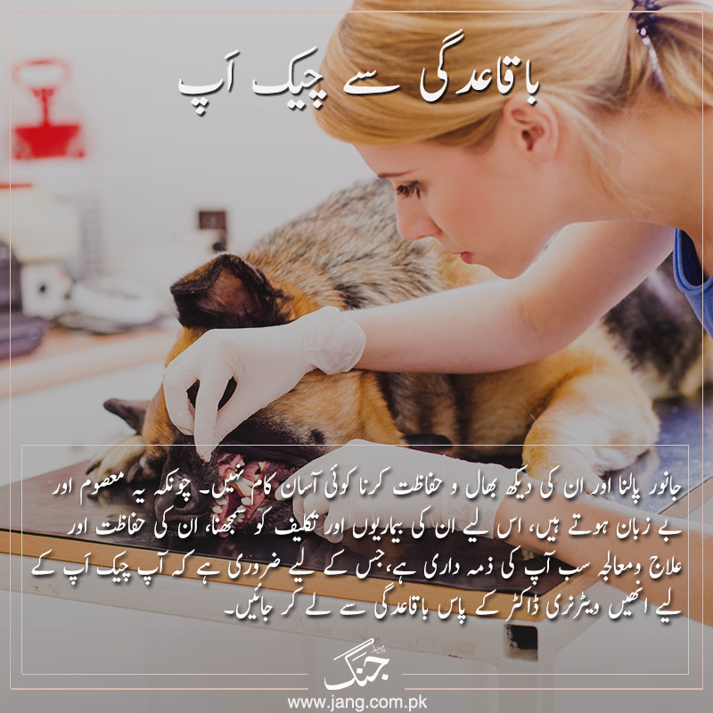 regular checkups taking care of pets from ailments
